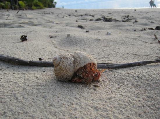 Matriki Beach Huts: Local