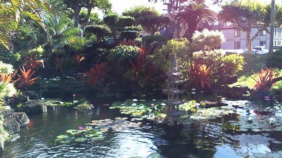 Pono Kai Resort: Koi pond