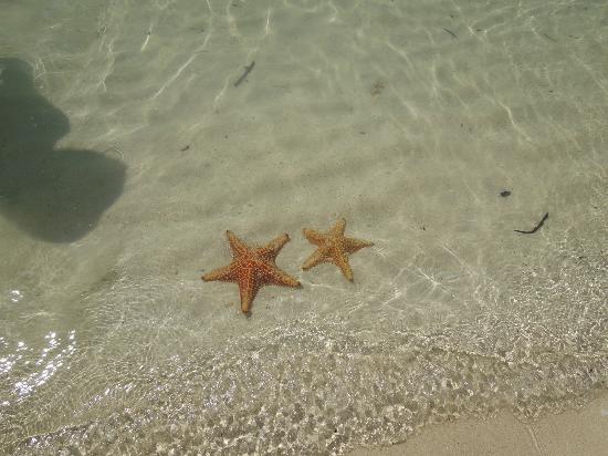 Star Fish Point: starfish