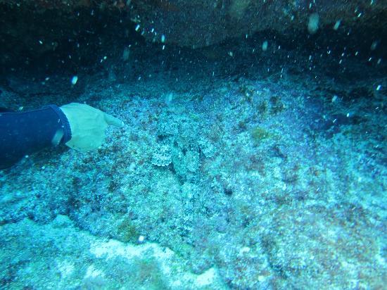 Squalo Adventures PADI Dive Resort #22312 : stonefish