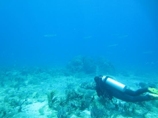 Squalo Adventures PADI Dive Resort #22312 : i love dinving