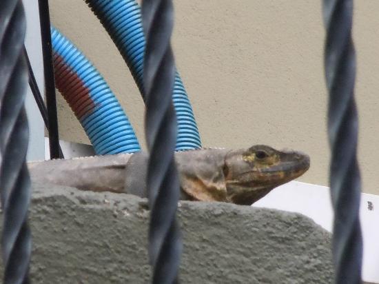 Villas Oasis: Lizard on Stoop