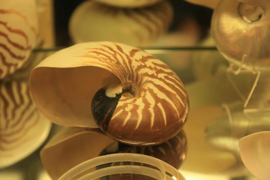 La Ferme Marine: the shell museum