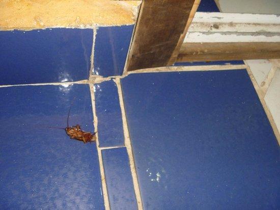 Hotel Casa Dona Susana: Cucaracha en la habitación 01
