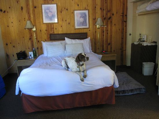 Cedar Glen Lodge: Room view (dog included)
