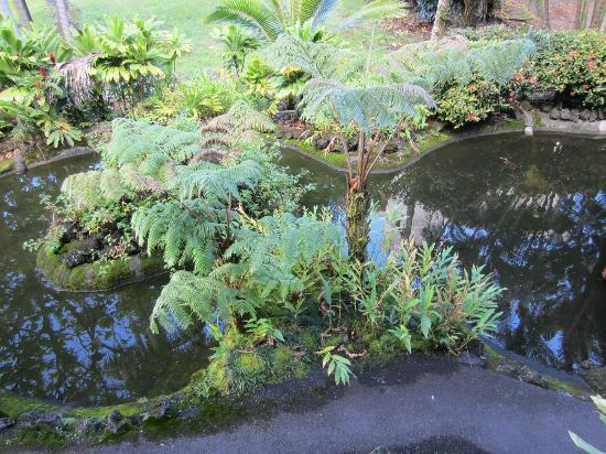 Uncle Billy's Hilo Bay Hotel: Pond outside room