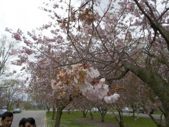 Bayonne Park