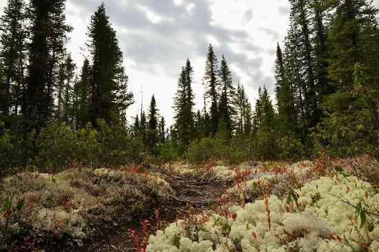 Le lichens - Picture of Parc National des Grands Jardins ...