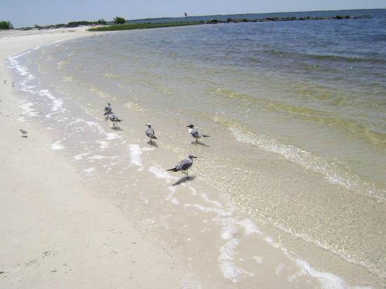 Fort Island Gulf Beach: Clean,clear water and beach!