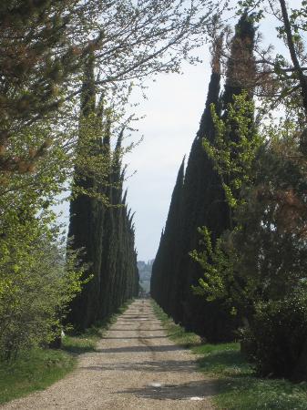 Provence Wine Tours : Provence wine tour