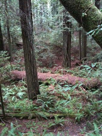 Redwood National Park: Trail behind cabins