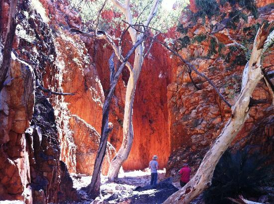 MacDonnell Ranges: Standley Chasm at noon