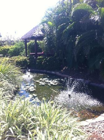 Mantra Frangipani Broome: the beautifuls ponds and gardens