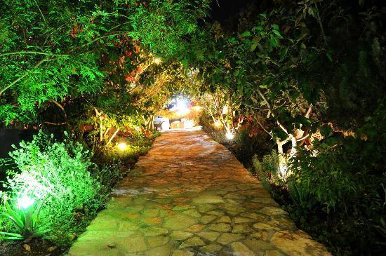 Tur Sinai Organic Farm Resort : The Garden