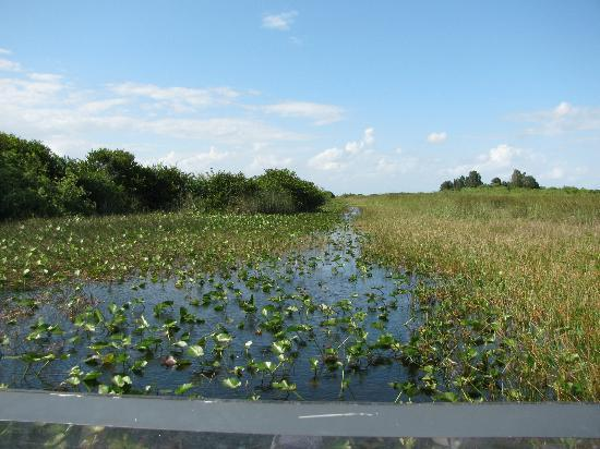 Tamiami, Flórida: Cruising through the everglades on an airboat
