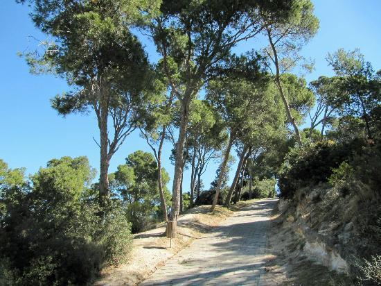 Monte Urpinu: The way up.