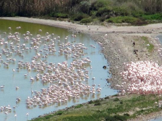 Monte Urpinu : Flamingos