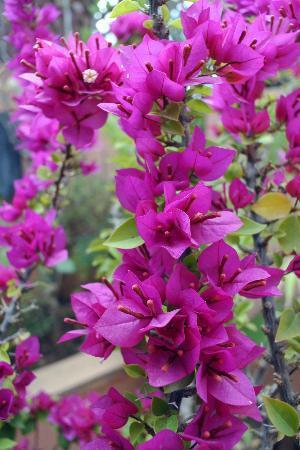 Riad Dar ATTIKA: De magnifiques fleurs ornent la terrasse.