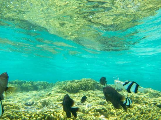 Ypao Beach Park: 珊瑚