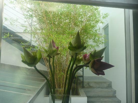 โฮเทล บี อังกอร์: Lotus flowers in our room!