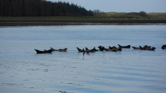 Donegal Town, Irlanda: The seal colony as seen from the waterbus