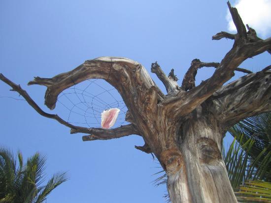 Luna de Plata · Hotel: Árbol en la playa Luna de Plata