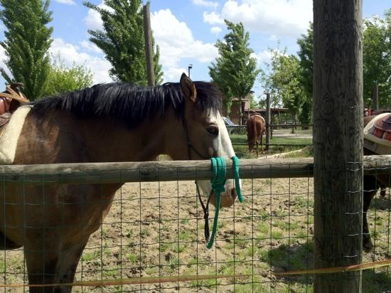 Ristorante dell'Agriturismo Biologico La Buona Terra : Cavalli