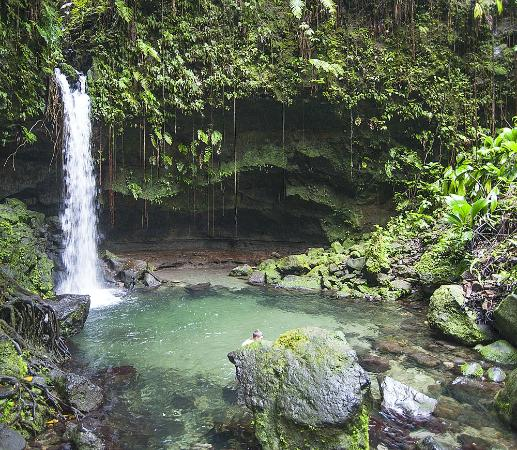 Morne Trois Pitons National Park, โดมินิกา: Emerald Pool Nature Trail