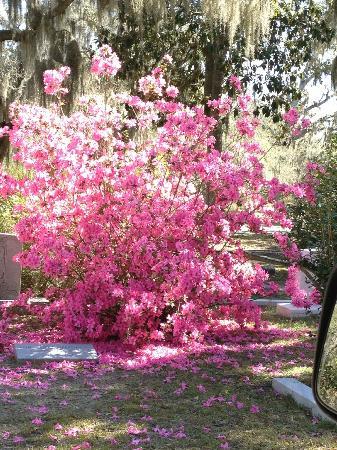 Savannah Historic District: Forsyth Park