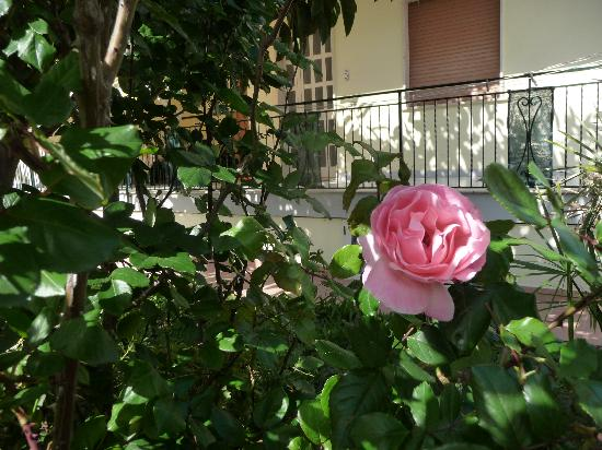 Parco La Conchiglia: giardino