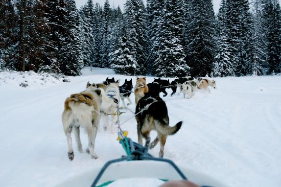 Amangani: Don't miss dogsledding in Jackson