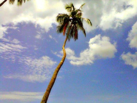 Maracas Bay: My fave spot on the beach...next to this coconut tree :)