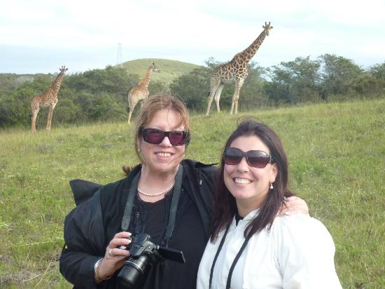 Nyaru Private Game Lodge: Mom's Beautiful Giraffe's