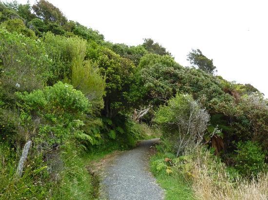 Village & Bays Tours - Stewart Island Experience : Stewart Island