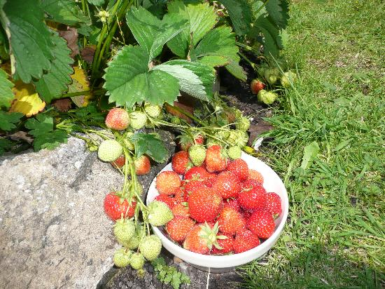 Dr Syns Guest House: Home Grown Strawberrys.