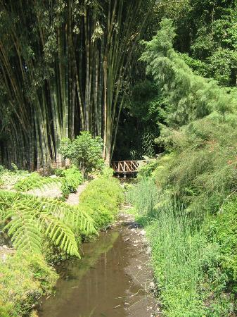 jardin botanico la laguna bamb