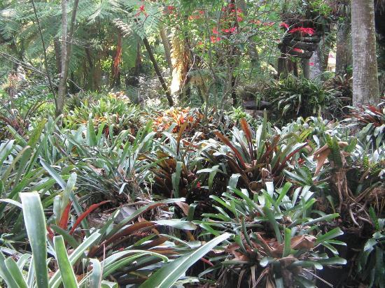 Bromelias picture of jardin botanico la laguna san for Botanico jardin