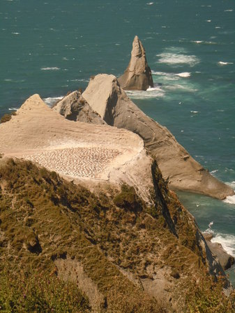 Mission B & B on the Avenue : Gannet Colony at Cape kidnappers