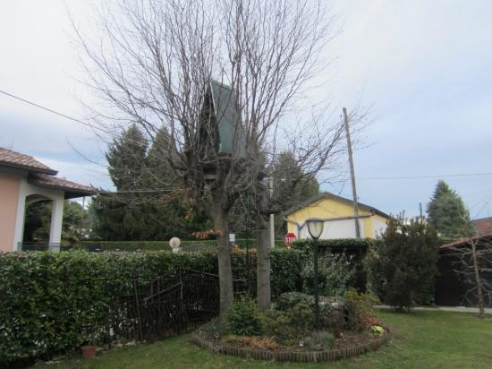 Il Terrazzo: Tree fort in front yard