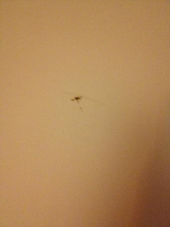Apartments Visit Barcelona: death bugs on the wall