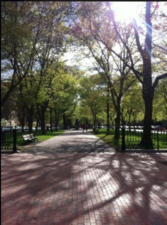 Back Bay: Commonwealth mall