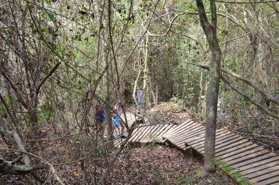 Parque Nacional Natural Tayrona: caminata de ida