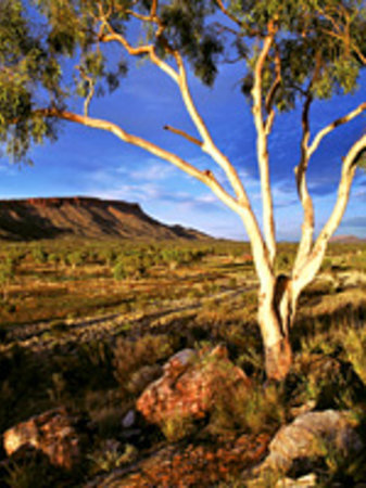 AAT Kings Alice Springs Day Tours