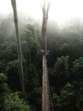 Borneo Rainforest Lodge: Canopy Tower in Fog