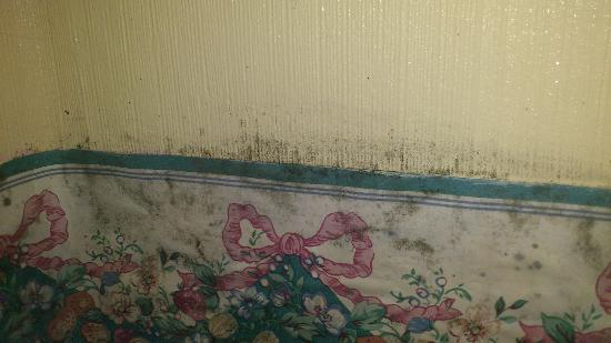 Bowral, Austrália: Bathroom mould.