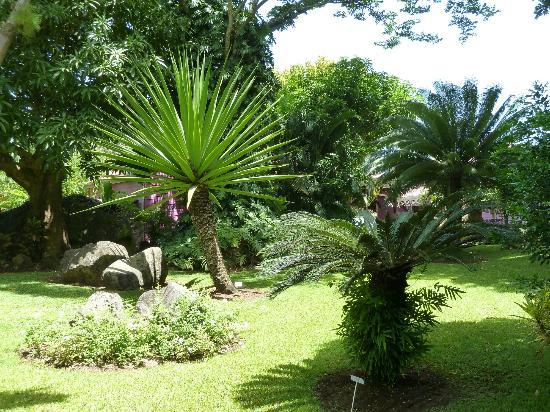 Figuier banian picture of jardin botanique de deshaies for Jardin botanique deshaies
