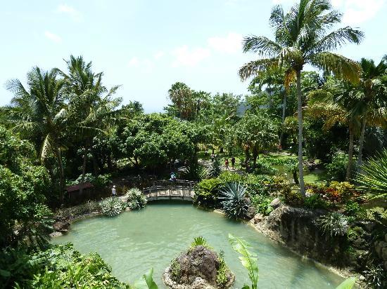 Le jardin l 39 arbre du voyageur photo de jardin for Restaurant jardin botanique
