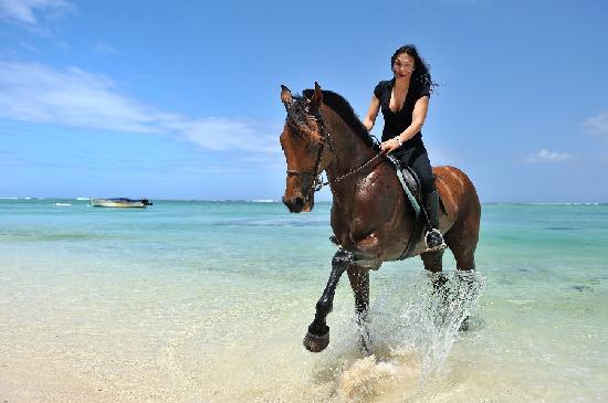 Haras Du Morne : A ride on the beach of Le Morne