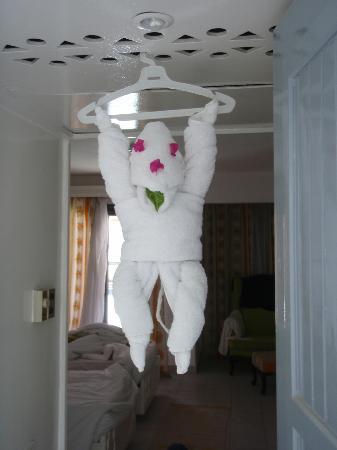 Kahramana Hotel: Glada överraskningar på rummet! Sammanlagt ett helt zoo på en vecka!! : )