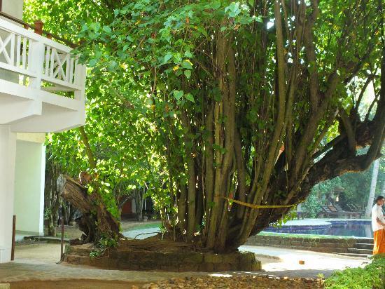 Barberyn Reef Ayurveda Resort: tree